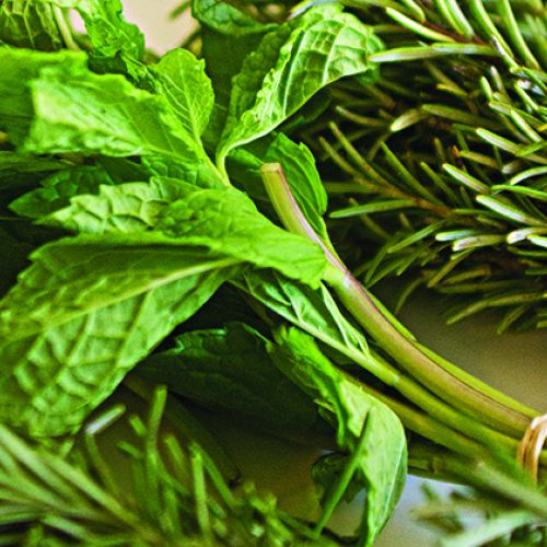 Mint and Rosemary Sinus Steam