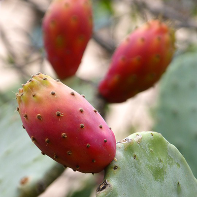 Prickly Pear Sauce